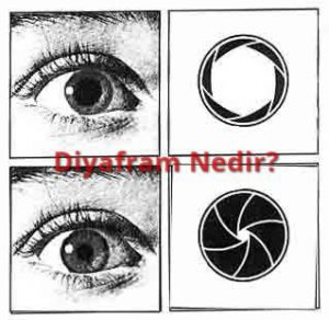 diyafram-ve-göz