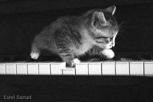 Piyano Çalan Kedi